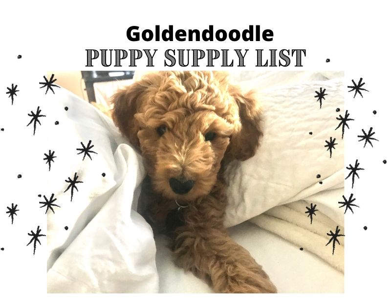 Goldendoodle Puppy Supply List: 15 Essential Items
