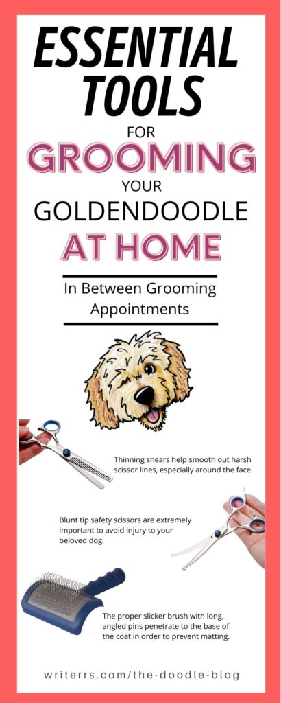 Essential Tools for Goldendoodle Grooming