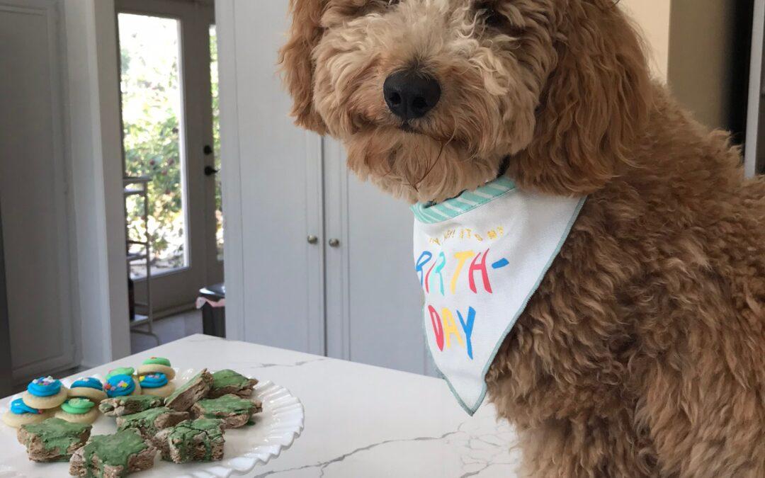 Dog Birthday Ideas: How We Celebrated Kai's First Birthday