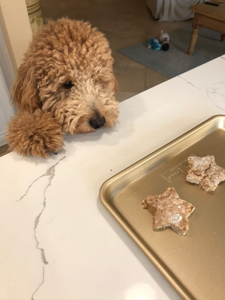 dog birthday ideas homemade dog biscuits