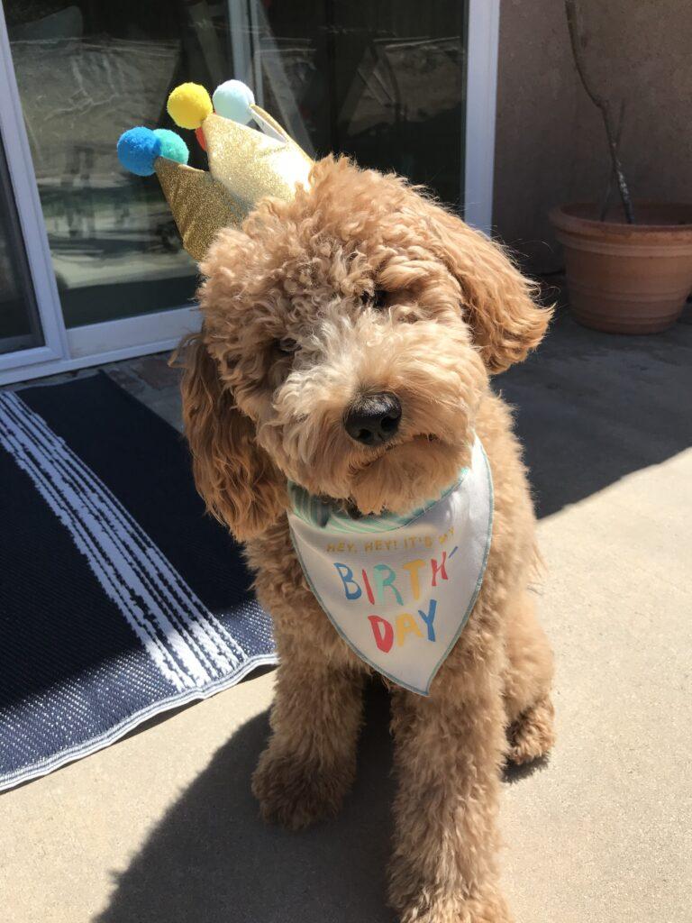 dog birthday ideas first birthday photo